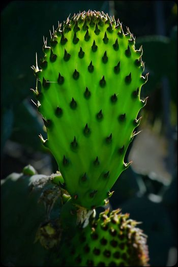 Glowing End to a Prickly Week Cactus Mountain View Back Light