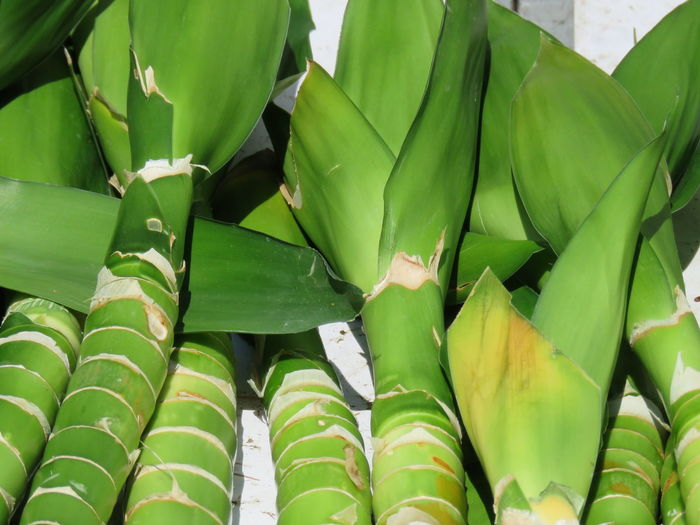 Abundance Backgrounds Banana Beauty In Nature Close-up Day Food Food And Drink Freshness Full Frame Green Color Growth Healthy Eating Leaf Leaves Nature No People Outdoors Pattern Plant Plant Part
