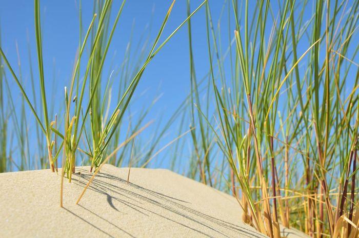 Home. Island Land Nature Sand Grass Beach Sunlight Sand Dune First Eyeem Photo