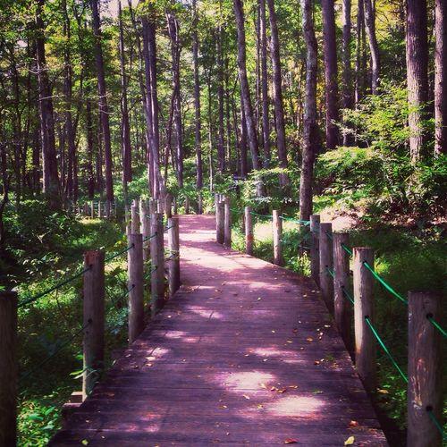 戸隠 秋の森林植物園の小道からです。 japan nagao prefecture togakushi road of forest park Forest 戸隠 森林植物園