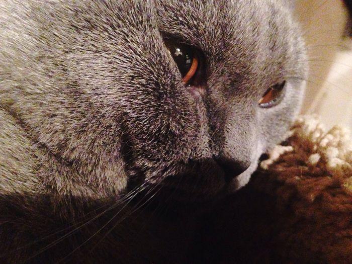 One Animal Animal Themes Domestic Animals Animal Body Part Domestic Cat Pets Animal Eye Taking Photos Photography Hello World Cat