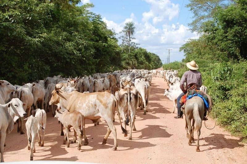 Brasil ♥ Cowboy Domestic Animals Pantanal