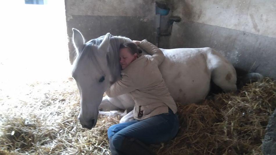 My cute boy, Galiwar... I love my horse 😍😘 I Love My Horse ❤️ Horse Enjoying Life Taking Photos Pure Photography Pureshot Hello World ❤ Gerasdorf Austria