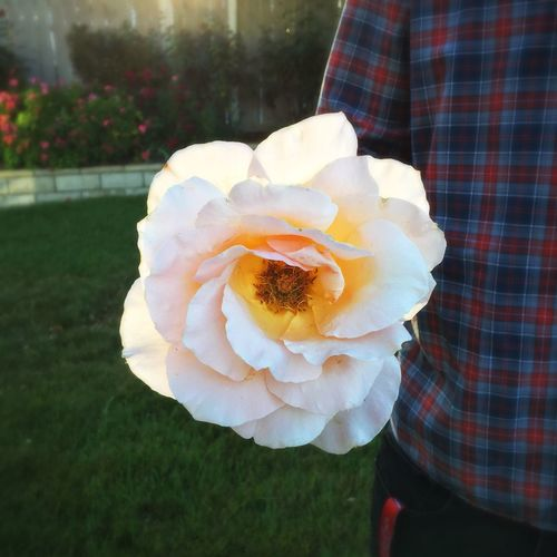 Before we went to dinner, he gave me a Beautiful White Rose Thank You Love Mylove Alwayshandedflowers Amazing