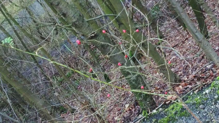 Zweige Beeren Früchte Früchte Der Natur Rot Red Color Spider Web Plant Green Color Beauty In Nature Backgrounds Full Frame Fragility