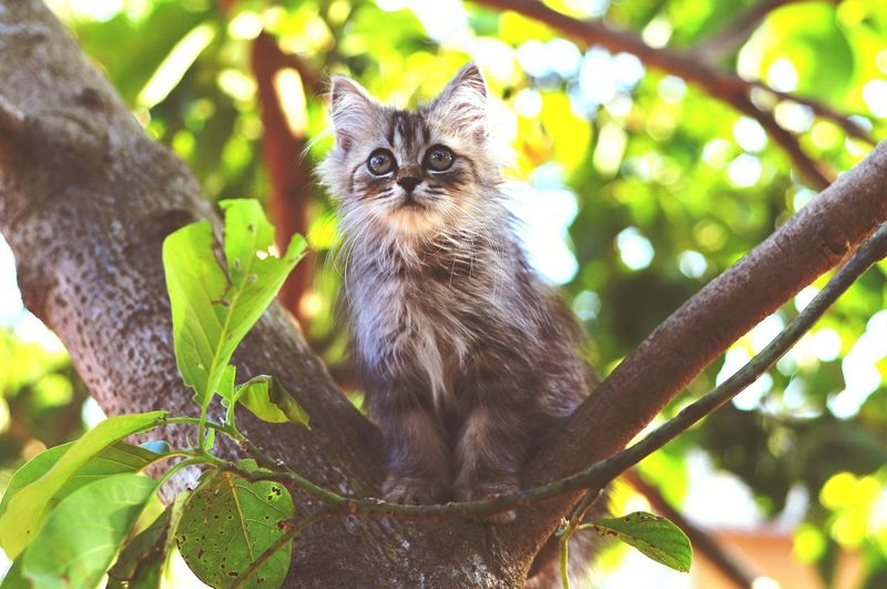 Cat Lovers Cats Of EyeEm Cats 🐱 Kitten 🐱 Tree Portrait Branch Looking At Camera Leaf Pets Animal Themes Close-up Domestic Cat Whisker Yellow Eyes Cat Kitten Carnivora Ginger Cat Persian Cat