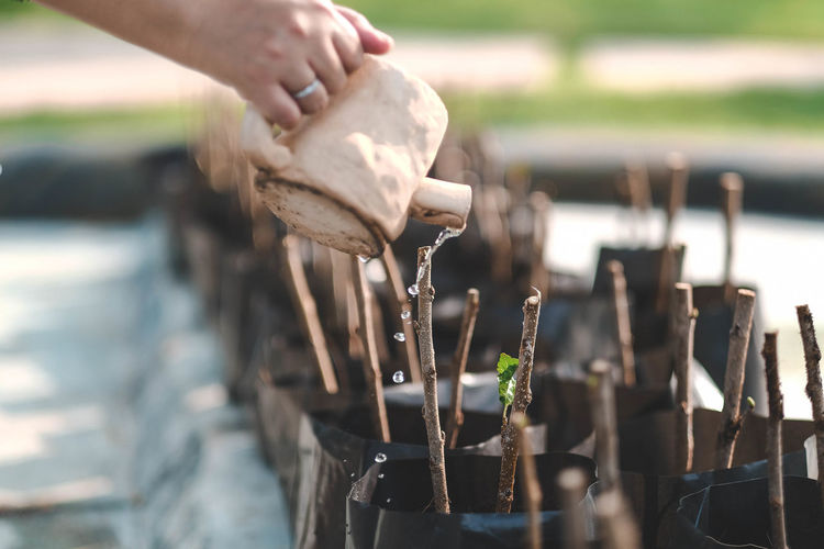 Cropped hand of person watering plants