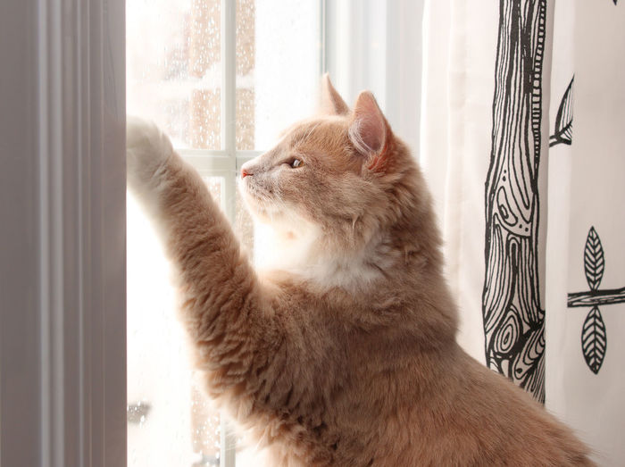 Cat Rearing Up By Window At Home