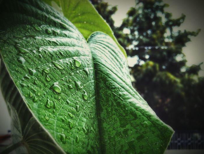 Leaf 🍂 Water