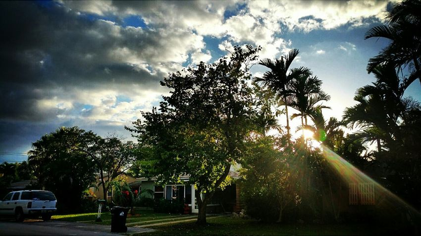 Tree And Sky Streetphotography The View From My Window Florida Ft Lauderdale