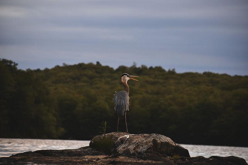 Bird perching on rock by sea against sky
