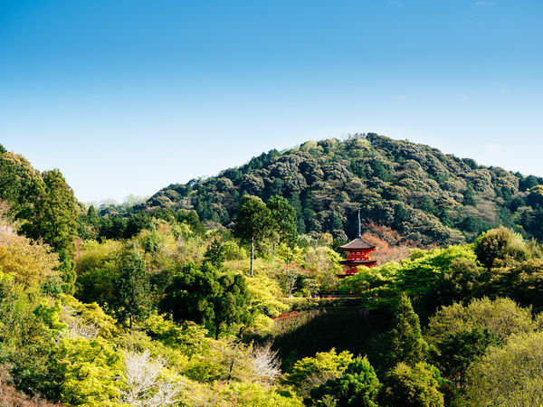 at the Kiyomizu-dera temple Beauty In Nature Blue Clear Sky Hill Mountain Nature Non-urban Scene Outdoors Scenics Temple Tourism Tranquil Scene Tranquility Travel Destinations Tree