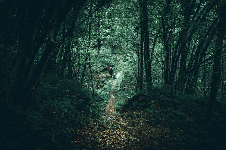 Full length of woman walking amidst trees in forest
