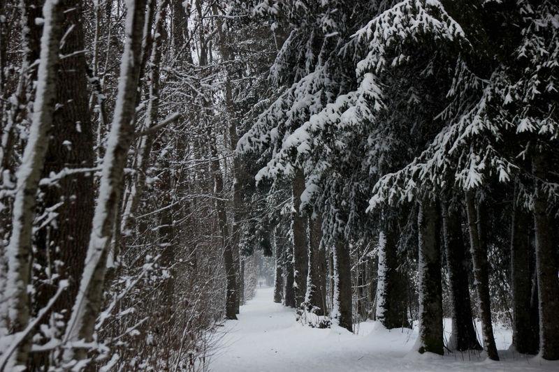 Auwald Bäume Cold Temperature Flussufer Schnee Schneelandschaft Winter Wonderland Winterwald