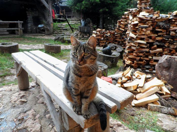 Portrait of cat sitting on log