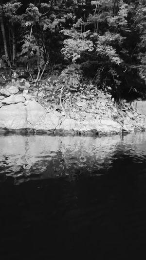 Tree Water Lush
