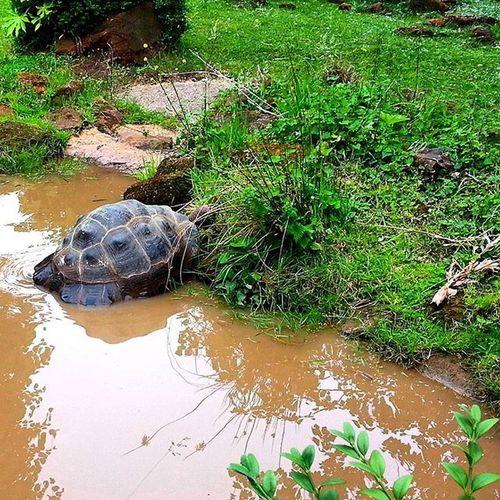 Set them free... 🐢 Londonzoo Londonwildlife Wildlifeincages Turtle Tortoise Unhappy Animalsofinstagram Cute Sadanimals Care2care