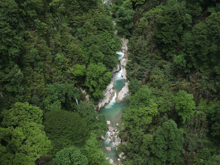 High angle view of stream through trees in rainforest