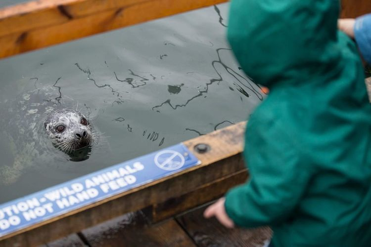 Kid Looking At Seal