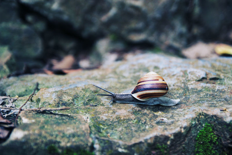 Focus On Foreground Selective Focus Snail Forest Rock Animal Beauty In Nature Nature Slow Life Slow Speed