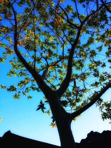 Tree Tree Plant Low Angle View Sky Beauty In Nature No People Nature Silhouette Scenics - Nature Branch Day Outdoors Blue Trunk Tree Trunk Environment Tranquility Sunlight Tranquil Scene