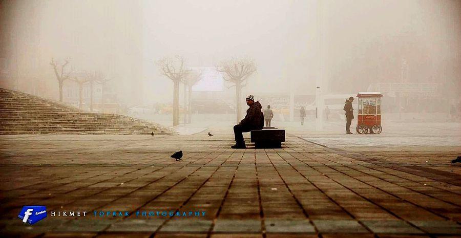 Taksim Meydanı Insan Dost Hayvan Yalnızadam Fog No People War Tree Day Outdoors