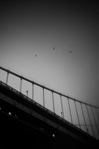 Bird Flying Animal Themes Low Angle View Clear Sky Animals In The Wild Railing No People Day Large Group Of Animals Sky Built Structure Outdoors City Bridge - Man Made Structure Flock Of Birds Architecture