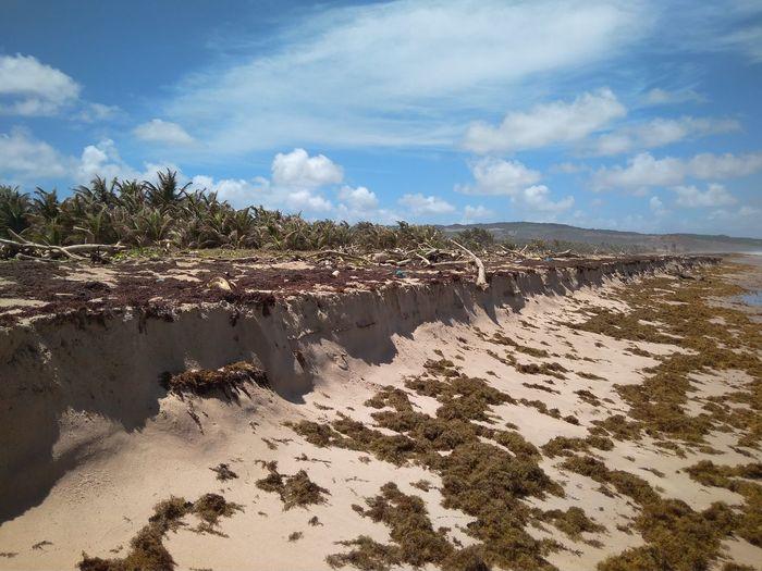 Sand Dune Tree Sea Beach Desert Sand Water Shadow Sunlight Arid Climate
