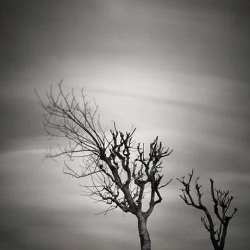 Nature Blackandwhite Landscape Eye4photography
