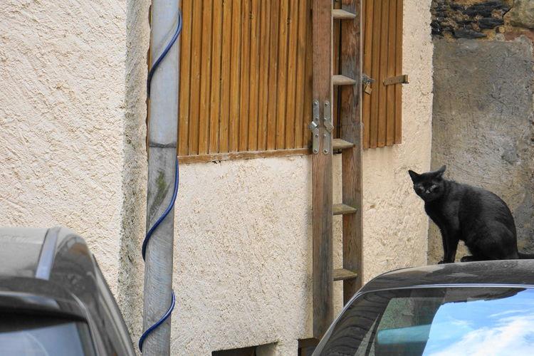 Black cat starring Black Cat Luxembourg Animal Animal Head  Animal Themes Animal Wildlife Architecture Black Color Building Exterior Built Structure Cat Day Domestic Domestic Animals Domestic Cat Feline Mammal No People One Animal Pets Sitting Vertebrate Vianden Whisker Window