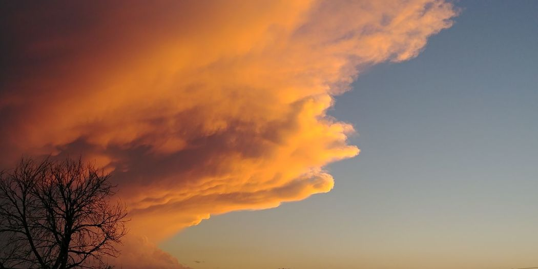 Illinois. Orange Color Sunset Sky Nature Cloud - Sky Dramatic Sky Beauty In Nature No People Tree Yellow Beauty Outdoors