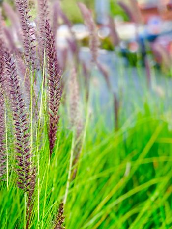 Plant Growth Beauty In Nature Green Color Grass Close-up Nature Fragility Sunlight Tranquility Selective Focus Focus On Foreground Field No People Agriculture Land Day Outdoors Freshness Vulnerability