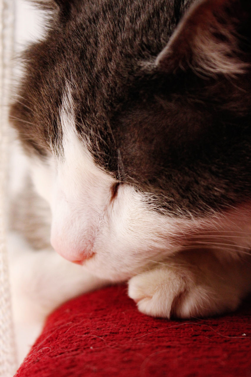 CLOSE-UP OF A CAT SLEEPING ON BED