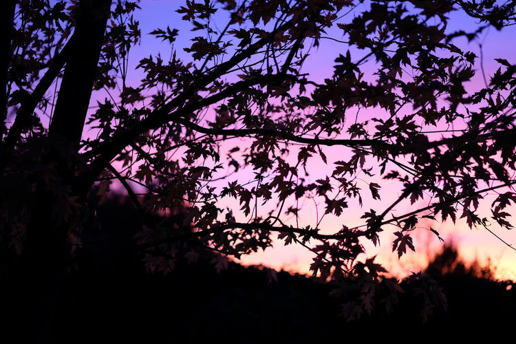 Beauty In Nature Branch Growth Low Angle View Nature Night No People Outdoors Scenics Silhouette Sky Tranquility Tree
