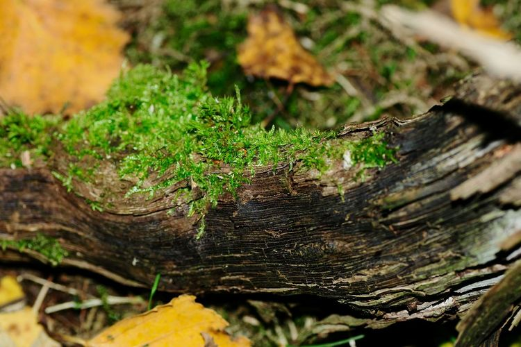 Nature No People Tree Close-up Outdoors Day Beauty In Nature EyeEm Nature Lover Beauty In Nature Nature Moss-covered Moss On Trees Moss And Lichen
