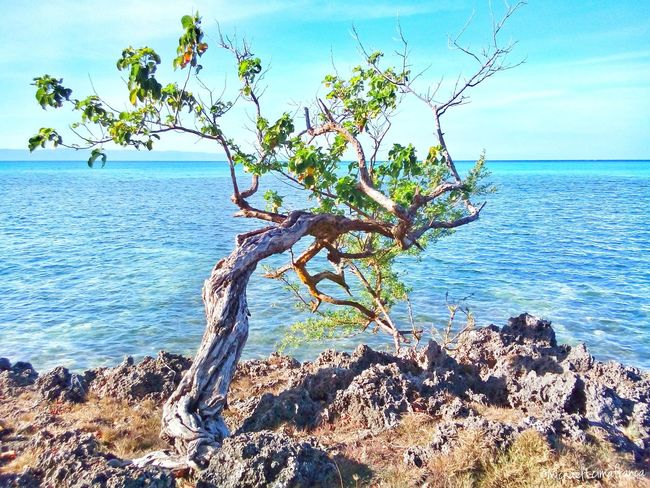 I must stand firm and keep my feet on the ground to withstand this harsh and unfair world. 10mar Wowsiquijor Beach Itsmorefuninthephilippines Visitph2015 Siquijorisland Beachphotography Wowphilippines Siquijor Googleearth