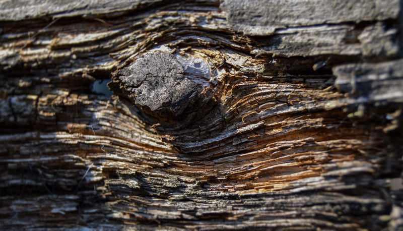 Perspectives On Nature Close-up Day Decaying Wood Knotted Wood Nature Outdoors Textured  Tree Tree Trunk Wood - Material