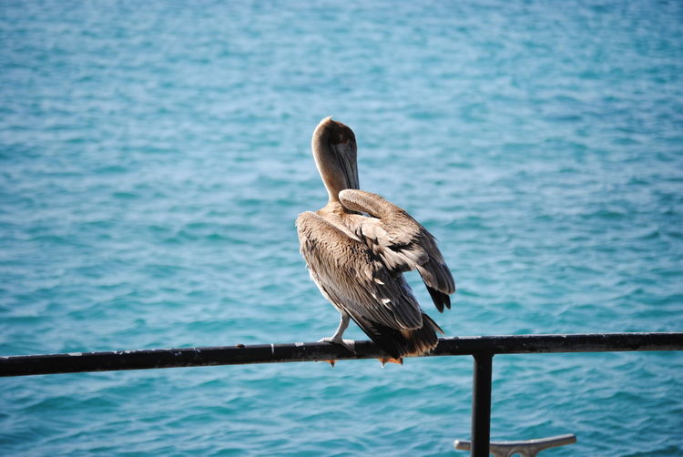 Beautiful bird on the sea Animal Animal Themes Animals In The Wild Avian Beak Beauty In Nature Bird Blue Day Focus On Foreground Nature No People One Animal Perching Railing Rippled Sea Selective Focus Tranquility Vertebrate Water Water Surface Waterfront Wildlife Zoology First Eyeem Photo