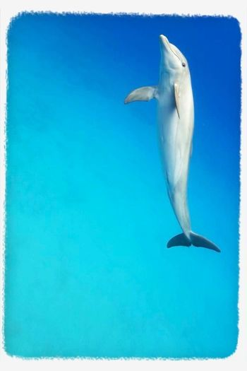 #Dolphin hug to everyone.