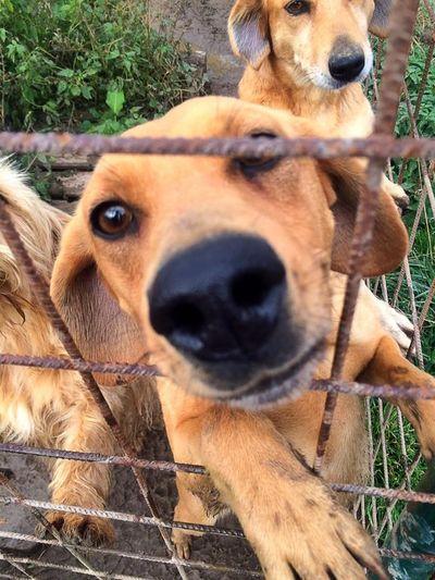 AzylSirius Czech Republic Dog Dog❤ Love Needhelp Rescuedog Spoleknaochranuzvířattábor