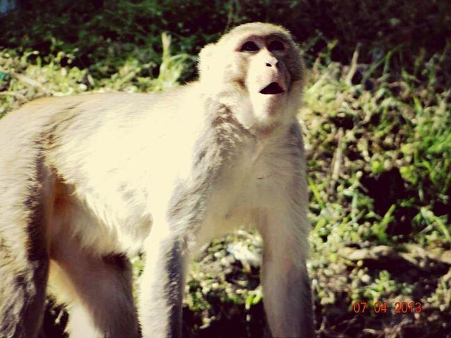 Monkey Animal Random