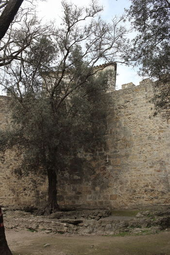 Castelo De São Jorge Tree Plant Architecture Nature No People Land Day Built Structure History Sky Outdoors The Past Old Growth Building Exterior Building Wall Tranquility