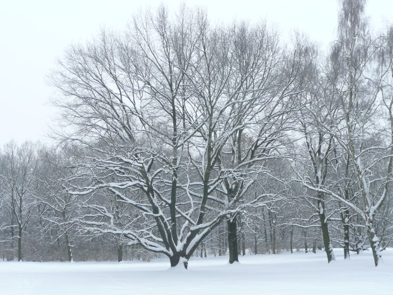 Bare Tree Beauty In Nature Black & White Cold Temperature Nature Outdoors Snow Snow Covered Trees Snowing Winter Winter In Berlin Park