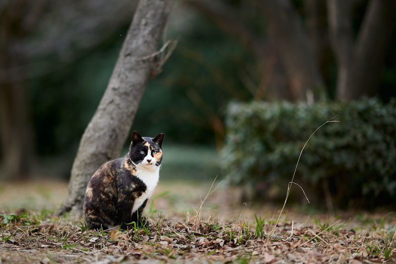 Calico cat sitting beside tree in a park