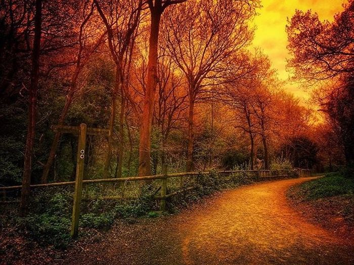 Glow With The Flow... Tree Plant Nature No People Tranquility Land Autumn