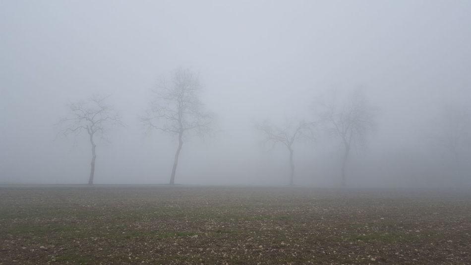 Brouillard à couper au couteau... Fog In The Trees France Tarn Et Garonne Mobilephotography Landscape_photography On The Road Fog On The Road Thick Fog Trees Montpezat-de-quercy Brouillard Matinal