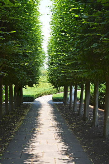 Garden Path Sun