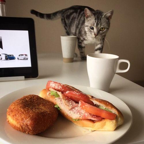昼ごはん 動物病院帰り恒例のパン屋さんのパンね😆😸🍴BLTサンド&昨日の夜カレーだったくせにうっかり買ったカレーパンね…👏