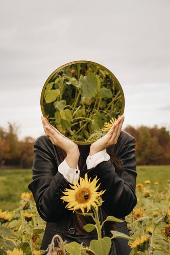 Close-up of person holding sunflower on field