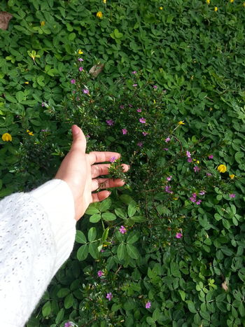 Flower Low Section Person Leaf Plant Personal Perspective Person Fragility Green Color Freshness Growth Green Human Foot Field Person Day Outdoors Branch Petal